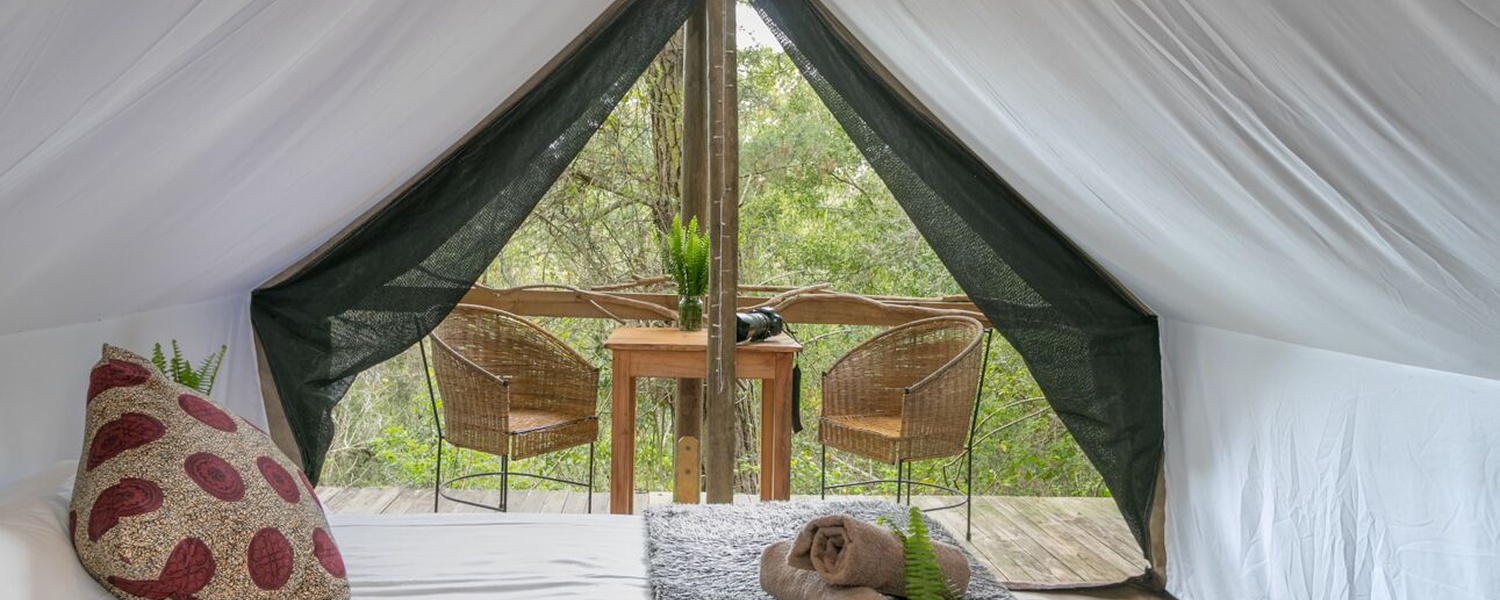 canvas forest tents, ferns, wildlife, birds, nature, peaceful, safety