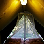 Forest tents keep you comfortable in the canopy.
