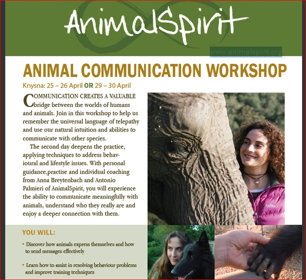 Animal Communication by Anna Breytenbach