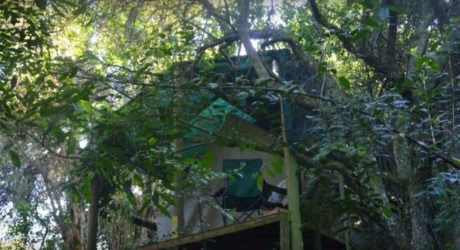 magical forest tents on timber decks in the indigenous forests of Peace of Eden Vegan Backpackers Retrea, Knysna, south africa
